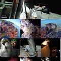 KRO さんの静岡県沼津市でのクロダイの釣果写真