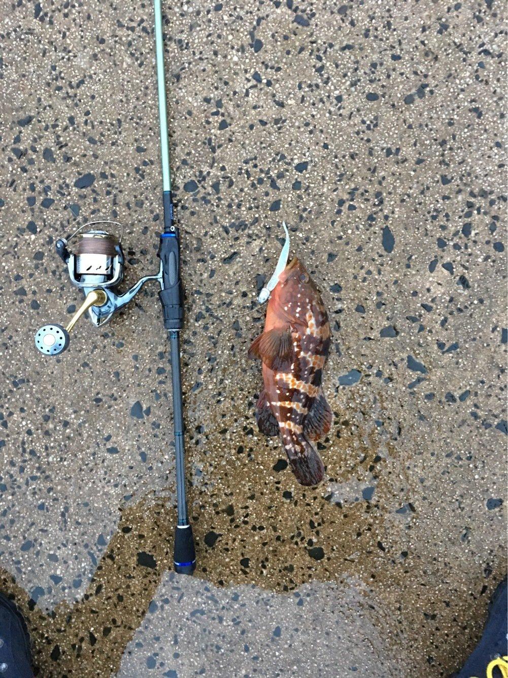 ロックフィッシュ命さんの投稿画像,写っている魚はキジハタ