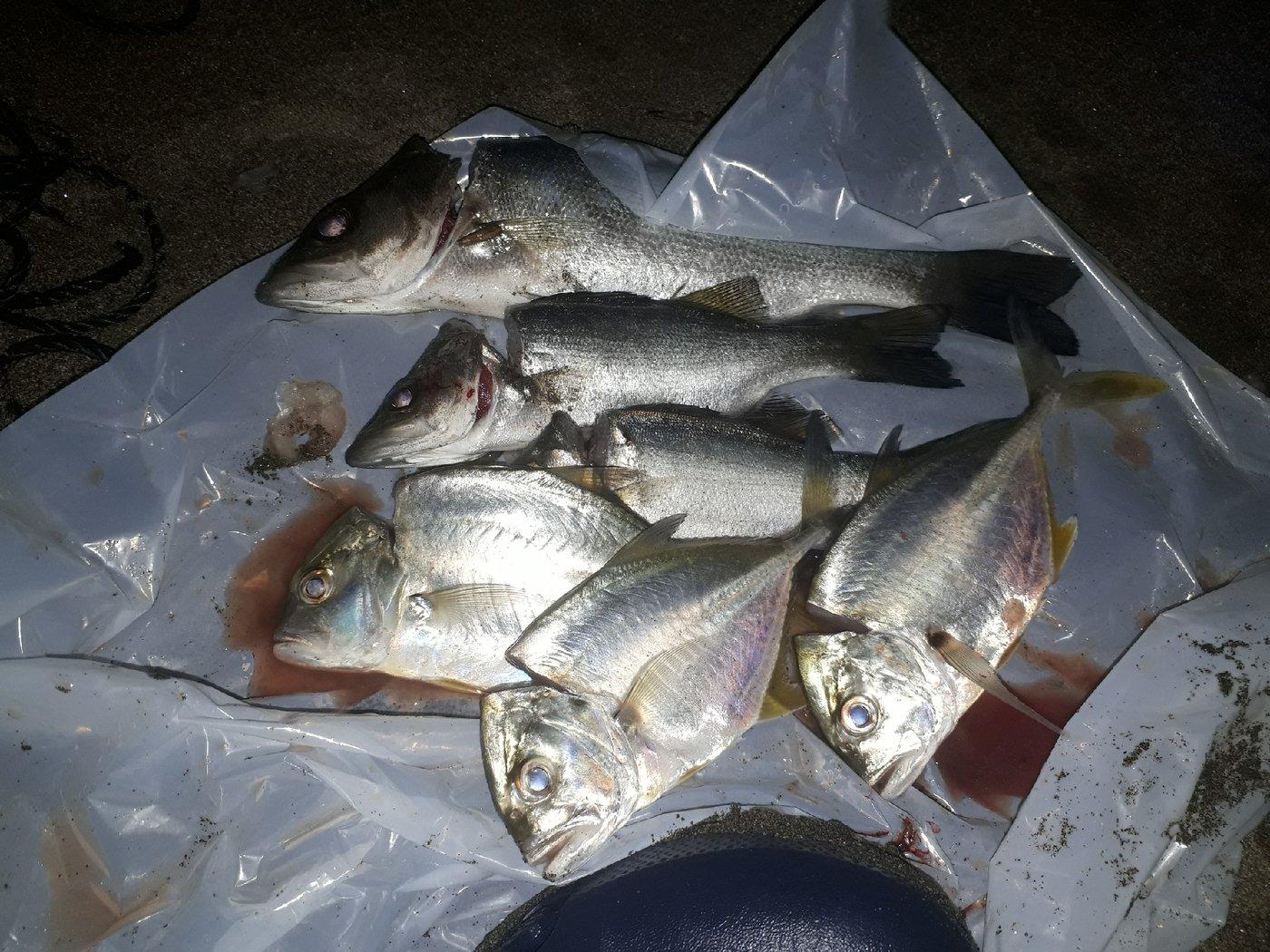 対々和さんの投稿画像,写っている魚は