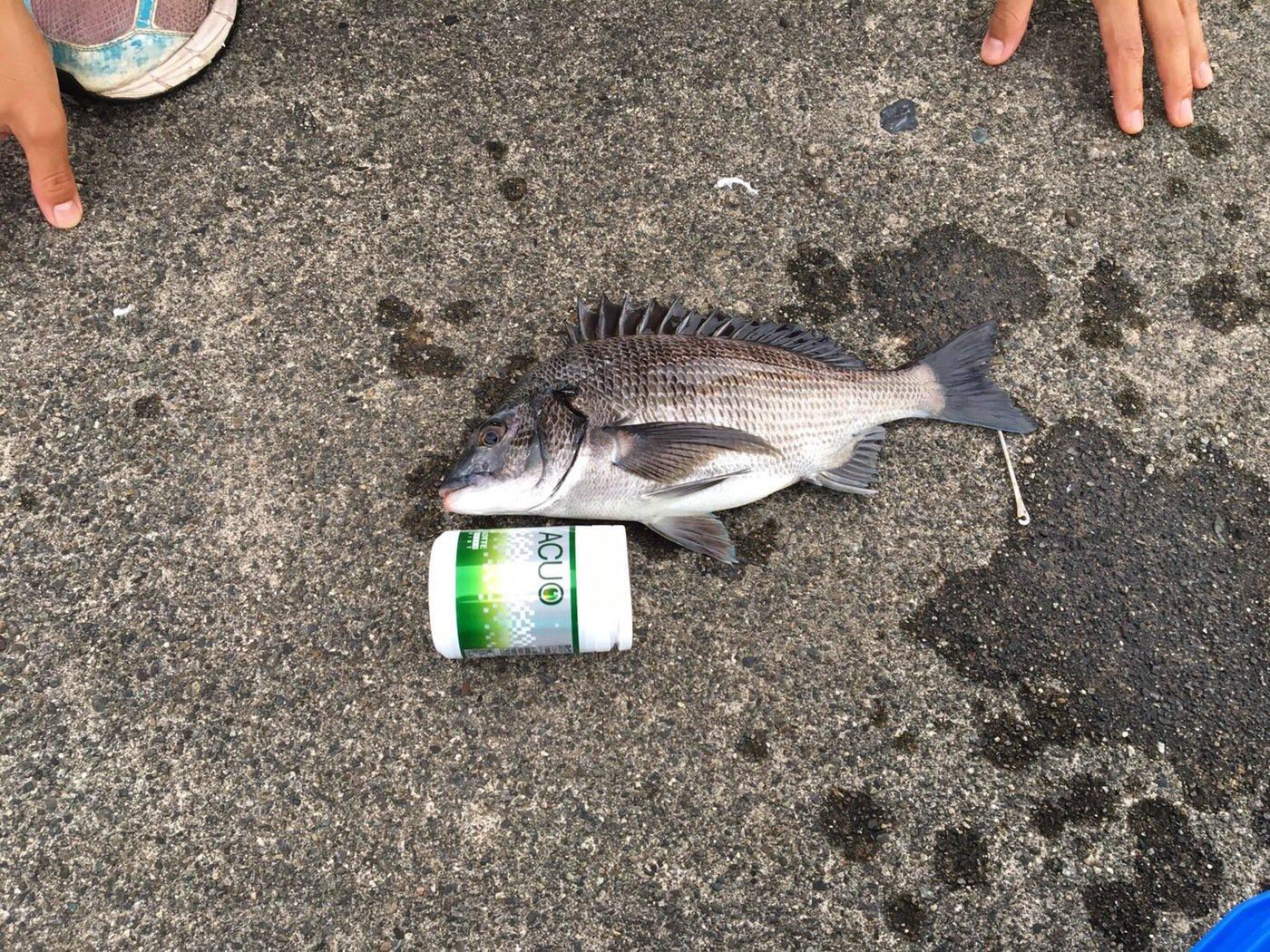 釣り好き野郎さんの投稿画像,写っている魚はクロダイ