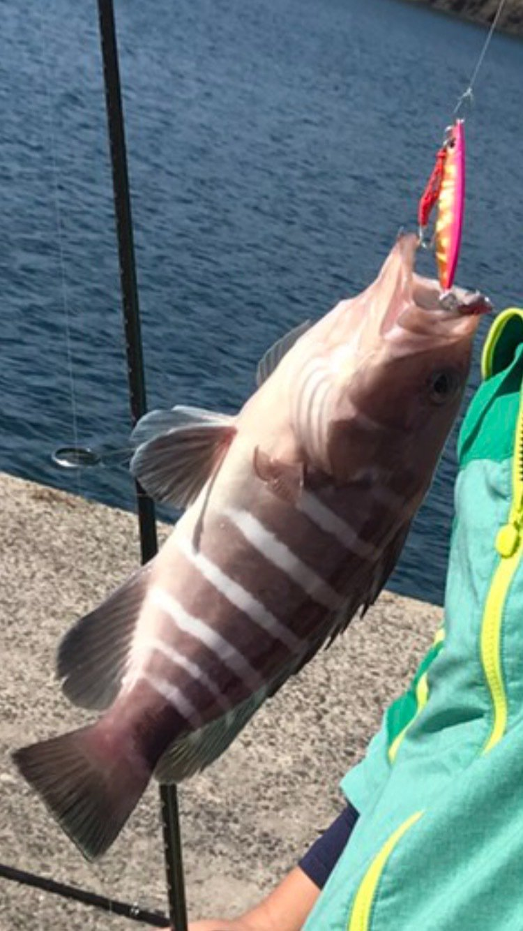 ぺーさんの投稿画像,写っている魚はマハタ