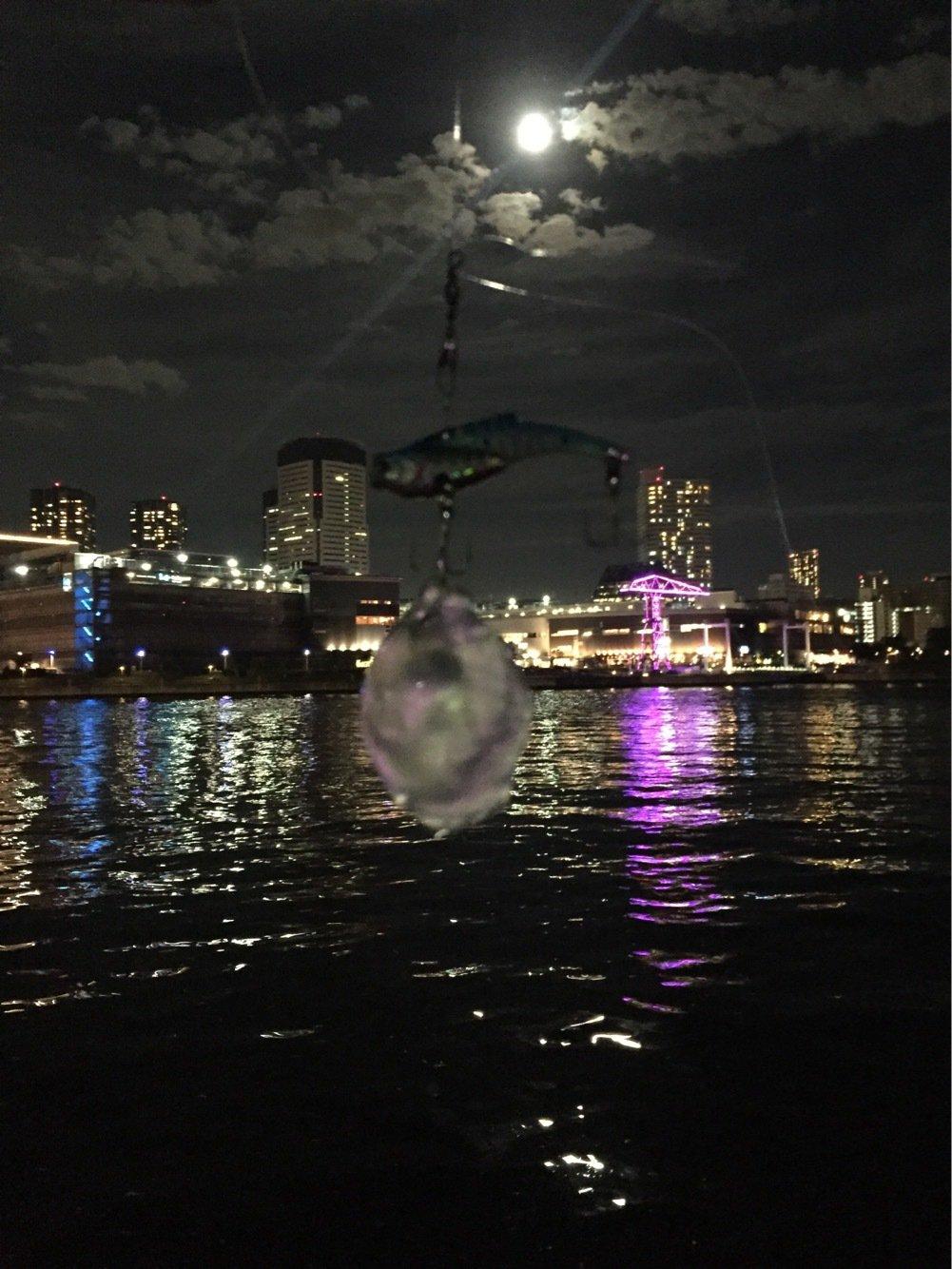 ヘルニアYo2さんの投稿画像,写っている魚は