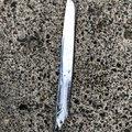 釣り人Aさんの新潟県新潟市でのタチウオの釣果写真