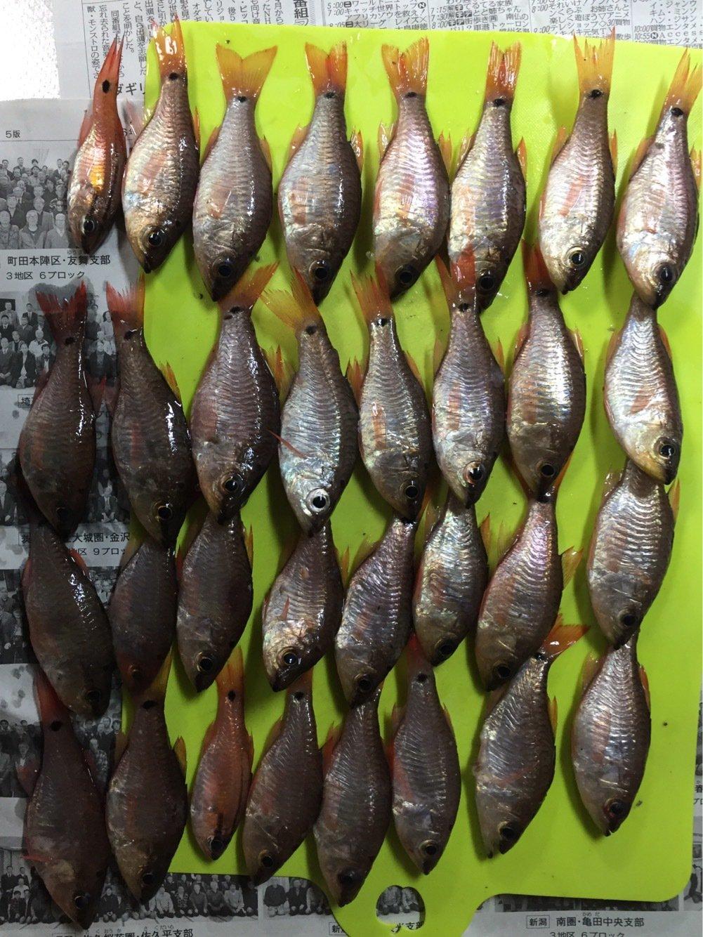 パパメガネさんの投稿画像,写っている魚はネンブツダイ
