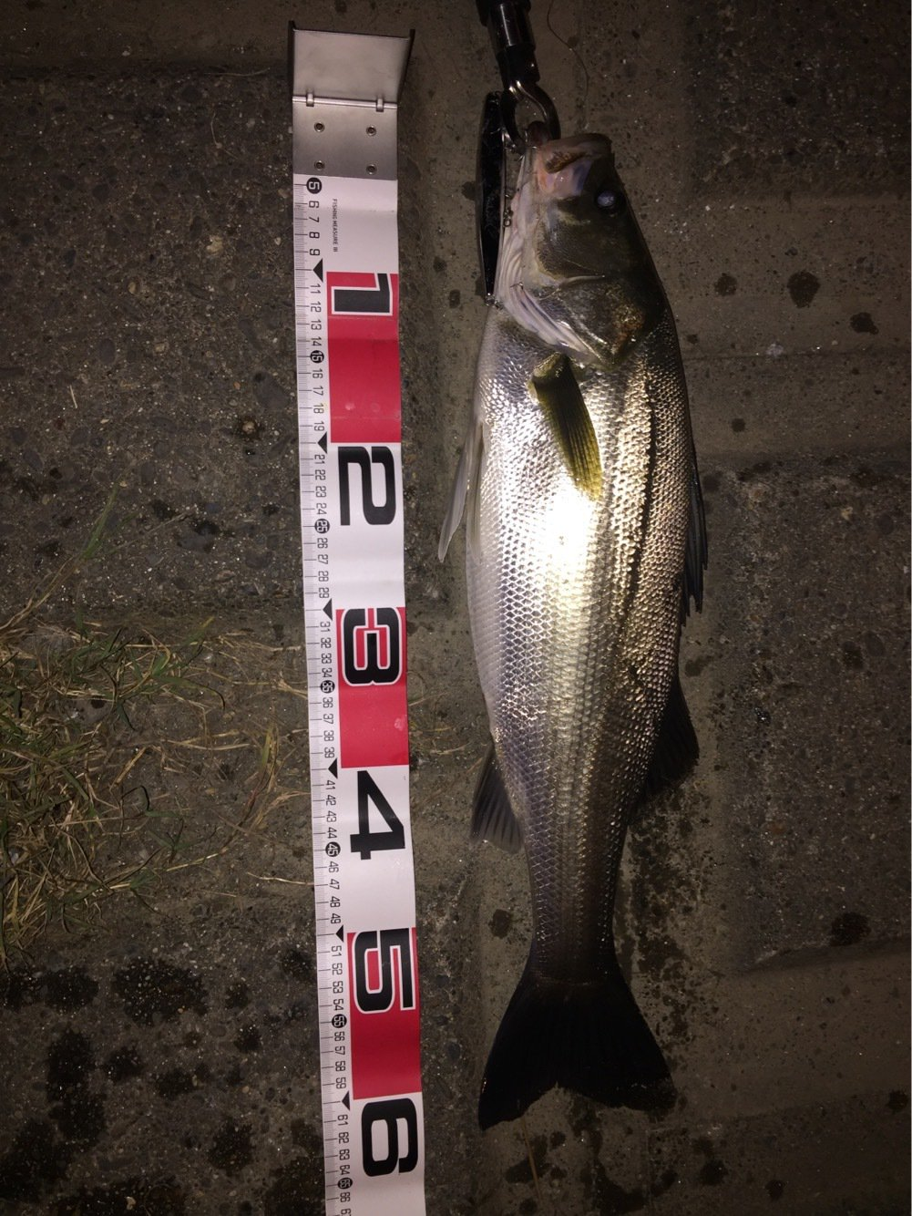 大ちゃんさんの投稿画像,写っている魚はスズキ