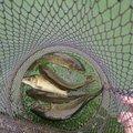 ryo7111@Orion_Kさんの埼玉県川越市での釣果写真