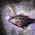 BBAさんの沖縄県でのイシモチの釣果写真