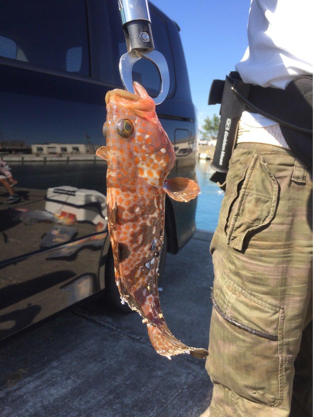 ビビさんの投稿画像,写っている魚はキジハタ