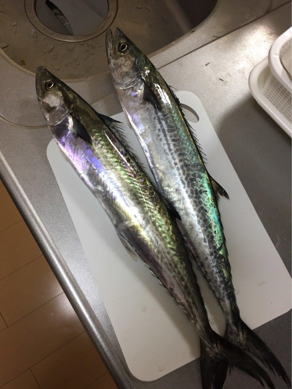 タさんの投稿画像,写っている魚はサワラ
