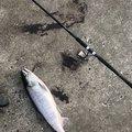 Kooky🍊さんの北海道斜里郡での釣果写真