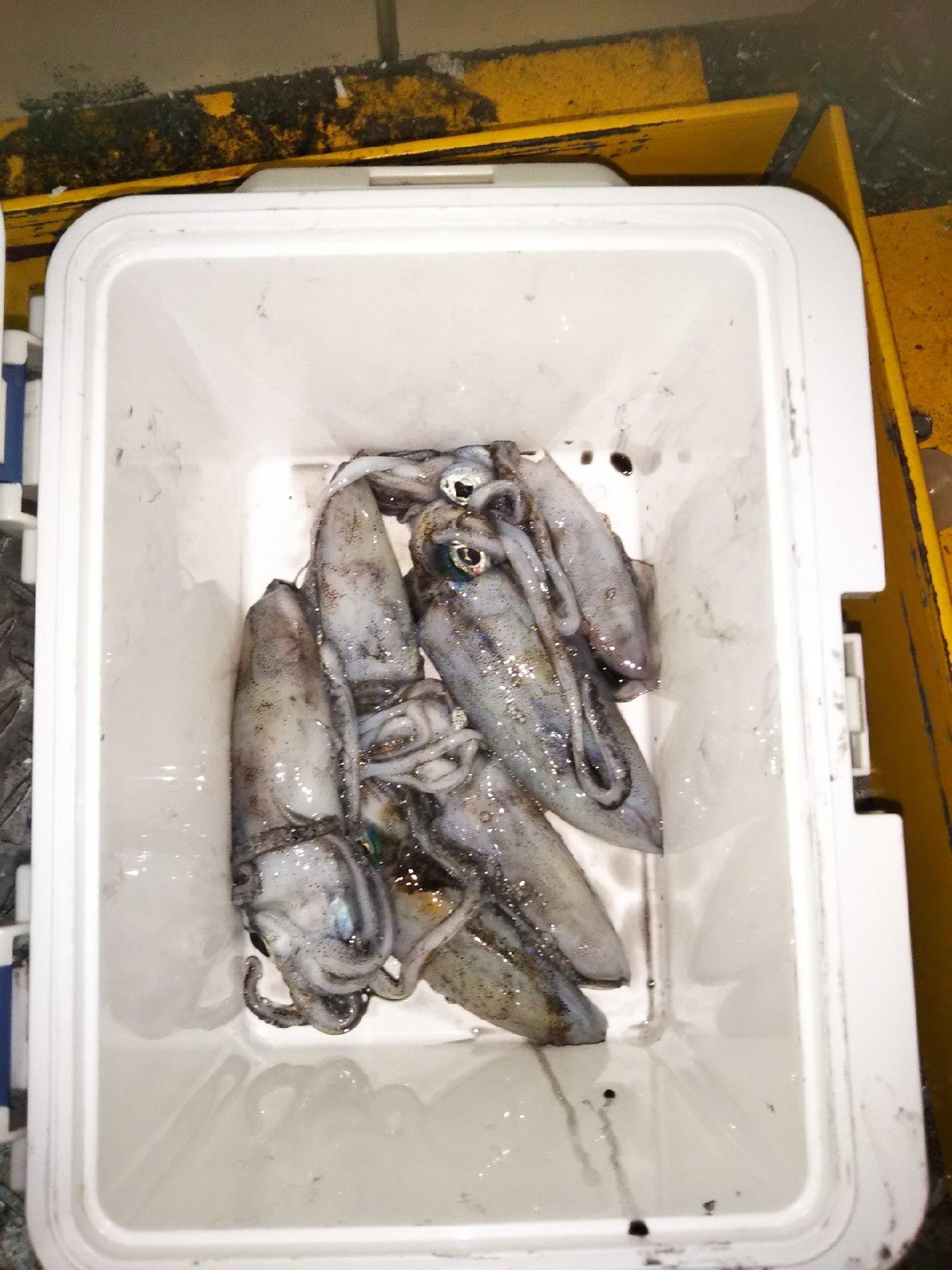 パピコさんの投稿画像,写っている魚は