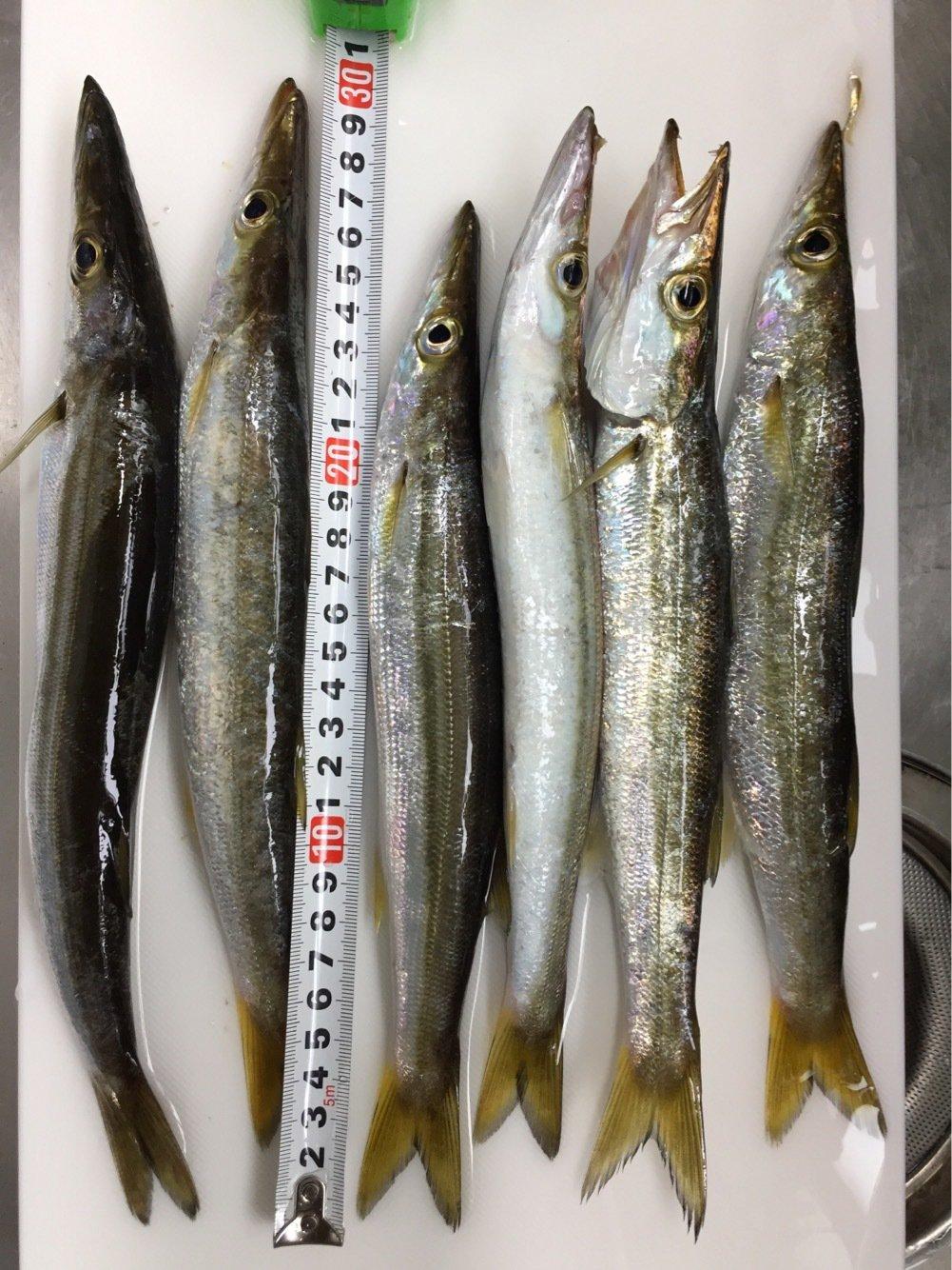 なべをさんの投稿画像,写っている魚はカマス