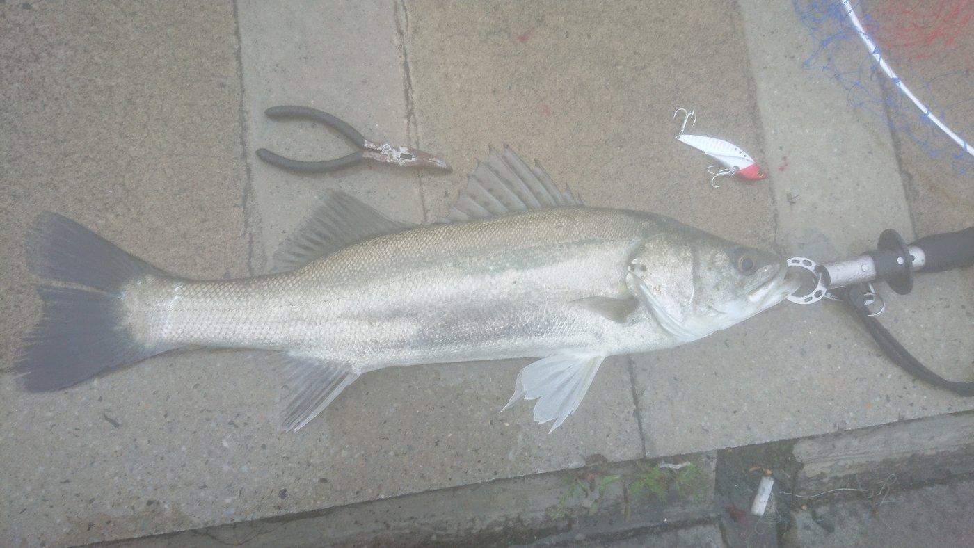のふのふさんの投稿画像,写っている魚は