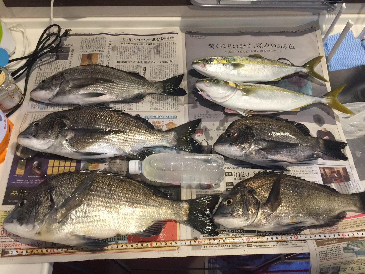 タクヤさんの投稿画像,写っている魚はクロダイ,ブリ
