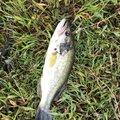 monshiloさんの福島県須賀川市での釣果写真