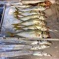 ハッピーターンさんの新潟県新潟市でのタチウオの釣果写真