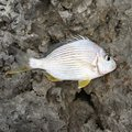 みーばいはんたーさんの沖縄県沖縄市での釣果写真