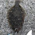 こまさんの宮城県名取市での釣果写真