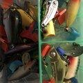 たまさんの兵庫県高砂市での釣果写真