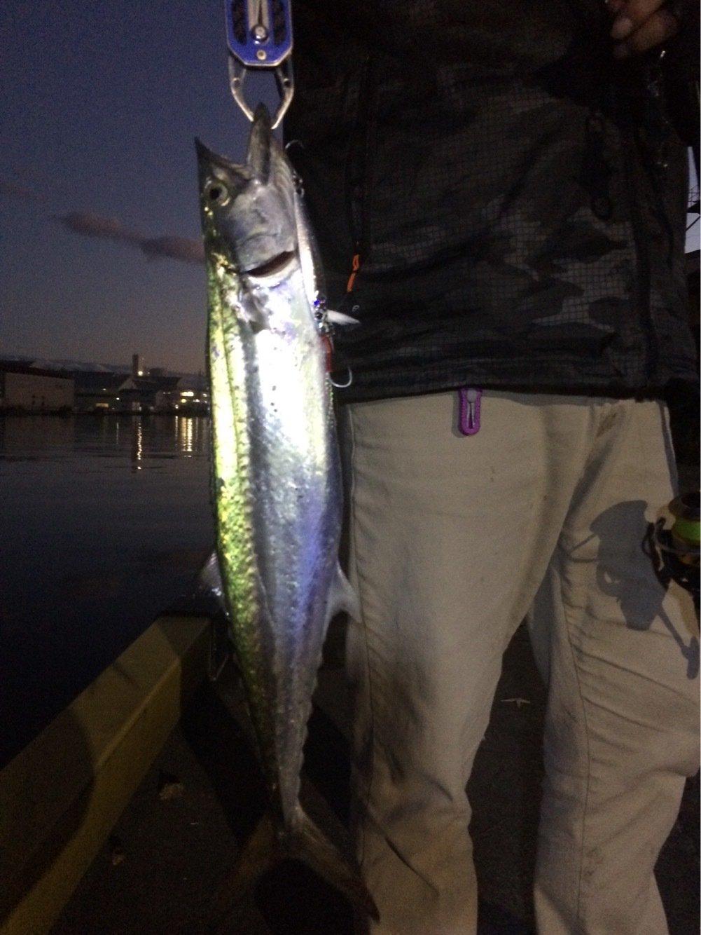 Alexさんの投稿画像,写っている魚はサワラ