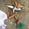 トモヤさんの石川県鳳珠郡での釣果写真