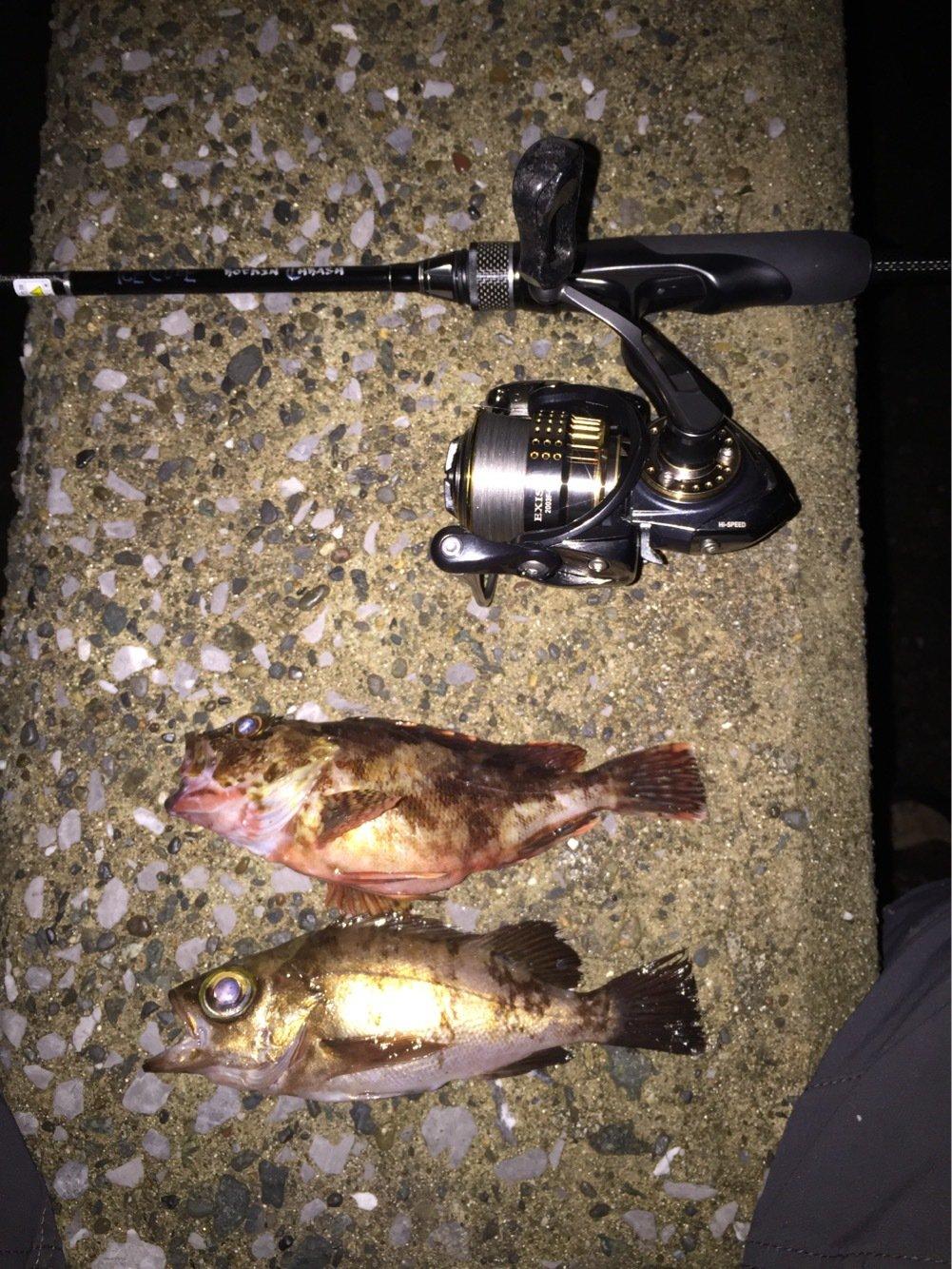 マサマサ🐡さんの投稿画像,写っている魚は
