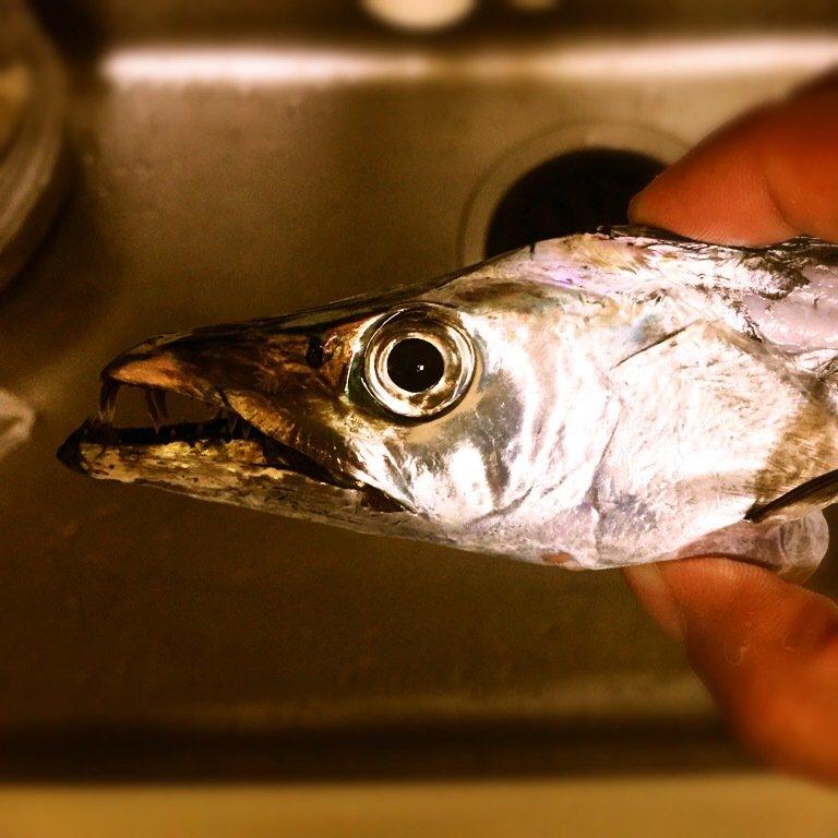 method-oneさんの投稿画像,写っている魚はタチウオ