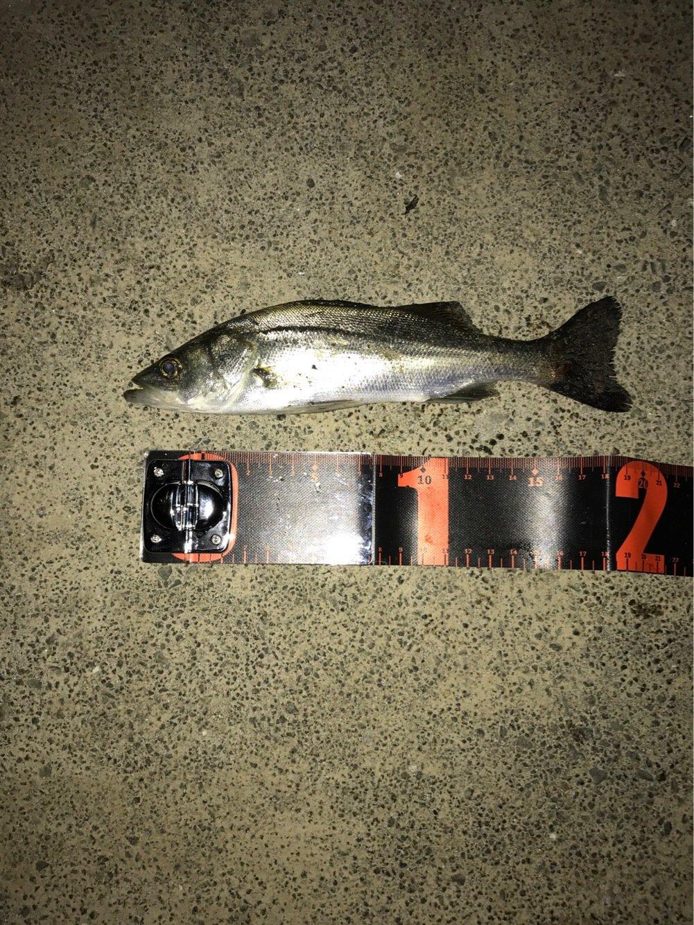 スズさんの投稿画像,写っている魚は
