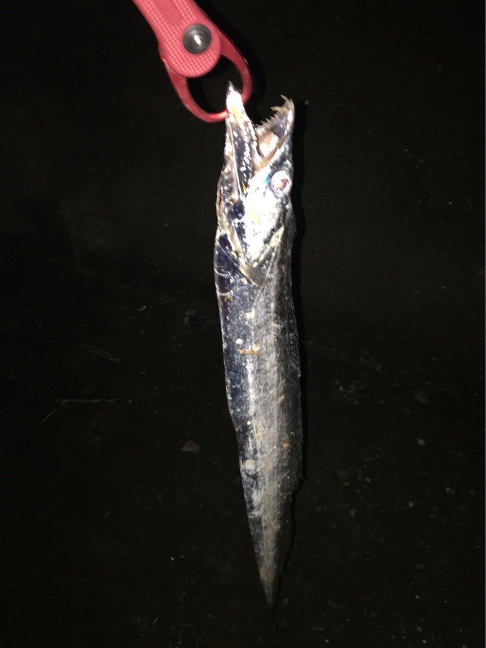 KAZOOさんの投稿画像,写っている魚はタチウオ