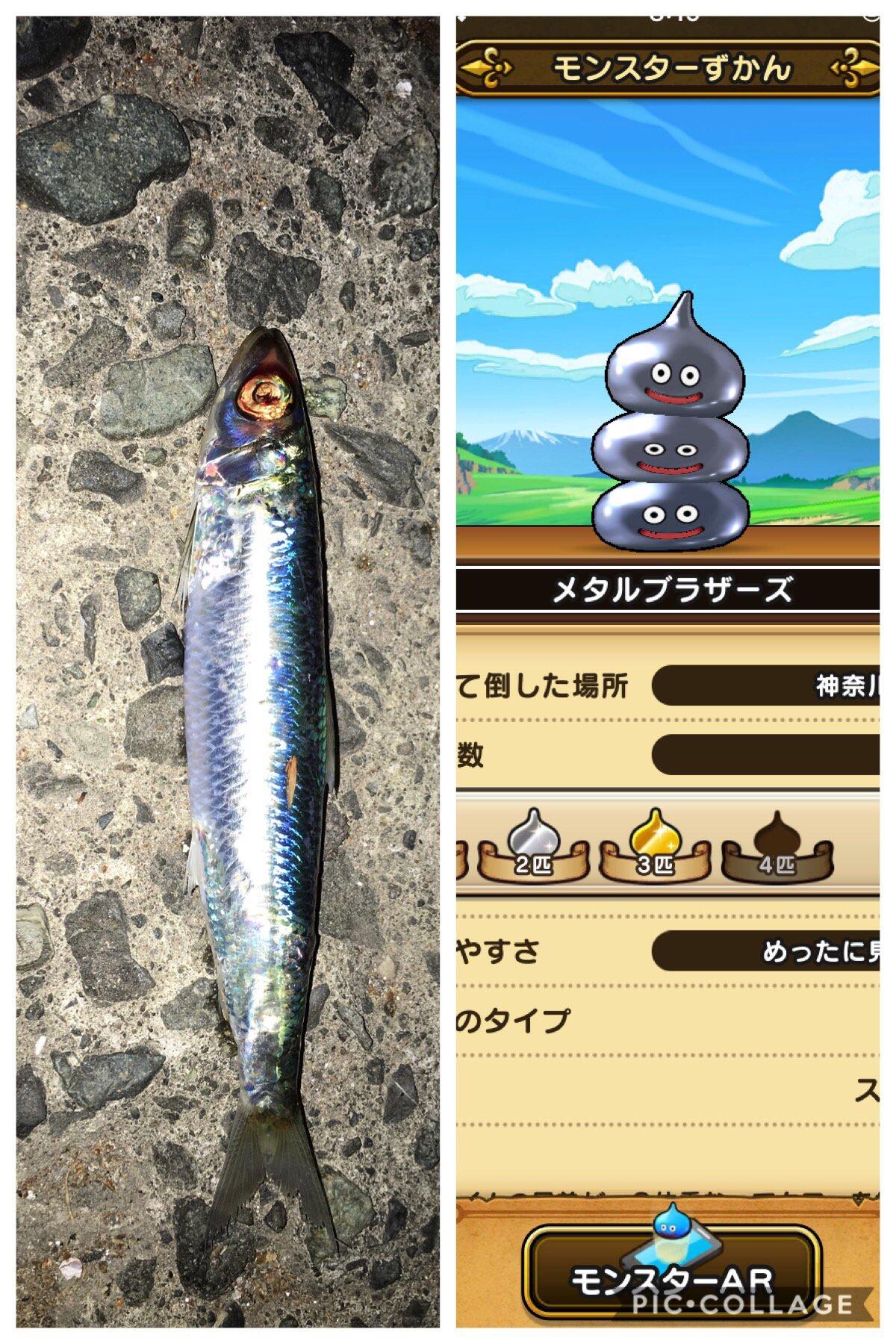 アキトパパさんの投稿画像,写っている魚はマイワシ