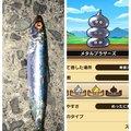 アキトパパさんの神奈川県藤沢市でのマイワシの釣果写真