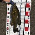 すらおさんの新潟県長岡市での釣果写真