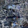 なかのさんの石川県鳳珠郡での釣果写真