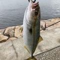 たまおさんの兵庫県芦屋市での釣果写真