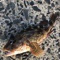 ちひろさんの島根県大田市での釣果写真