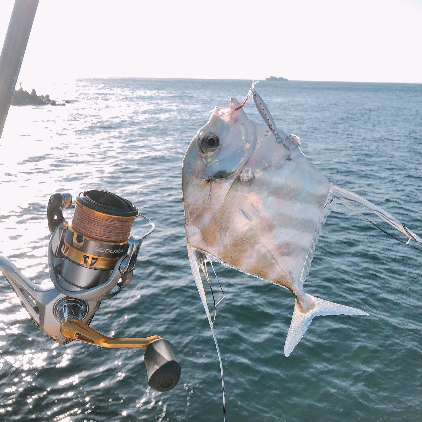 Mitさんの投稿画像,写っている魚はイトヒキアジ