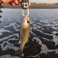 アオさんの千葉県山武郡での釣果写真