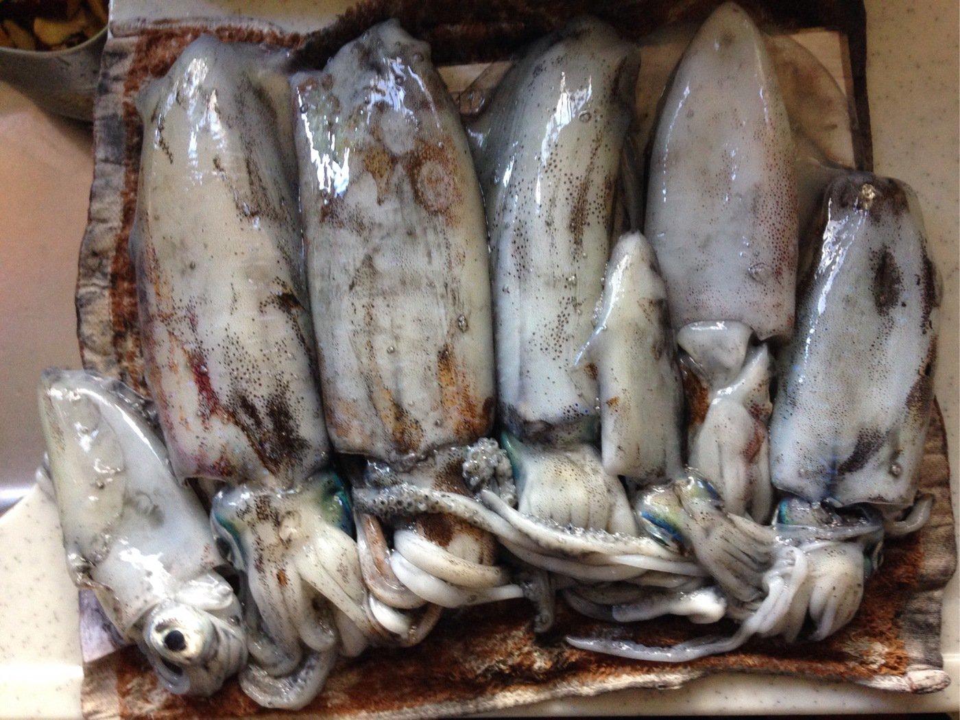 ヒロノリさんの投稿画像,写っている魚はアオリイカ