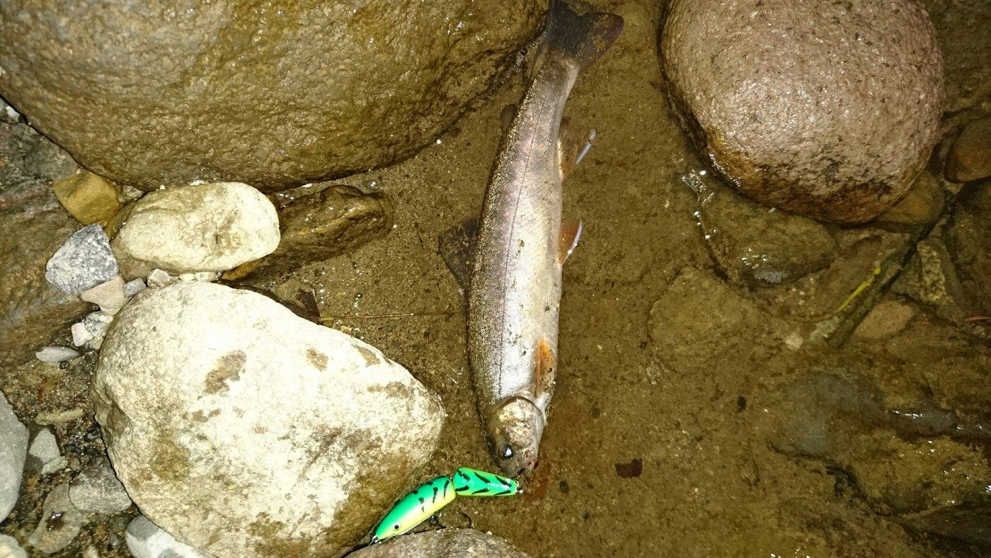 ゆうきさんの投稿画像,写っている魚はイワナ