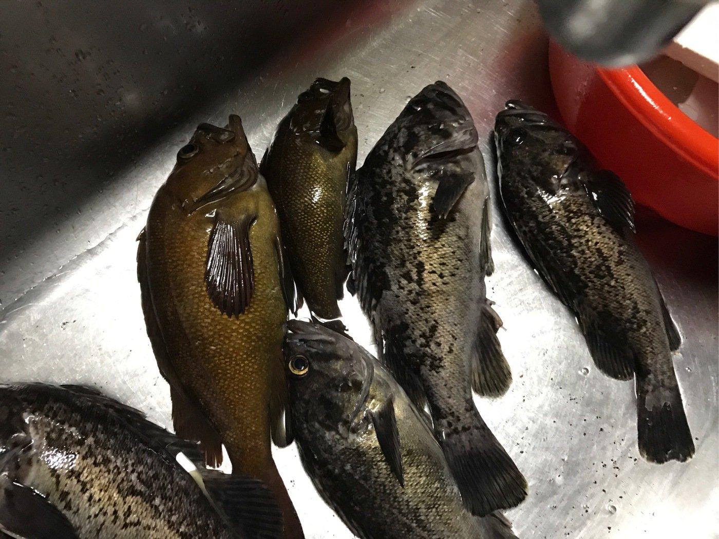 Leapさんの投稿画像,写っている魚は