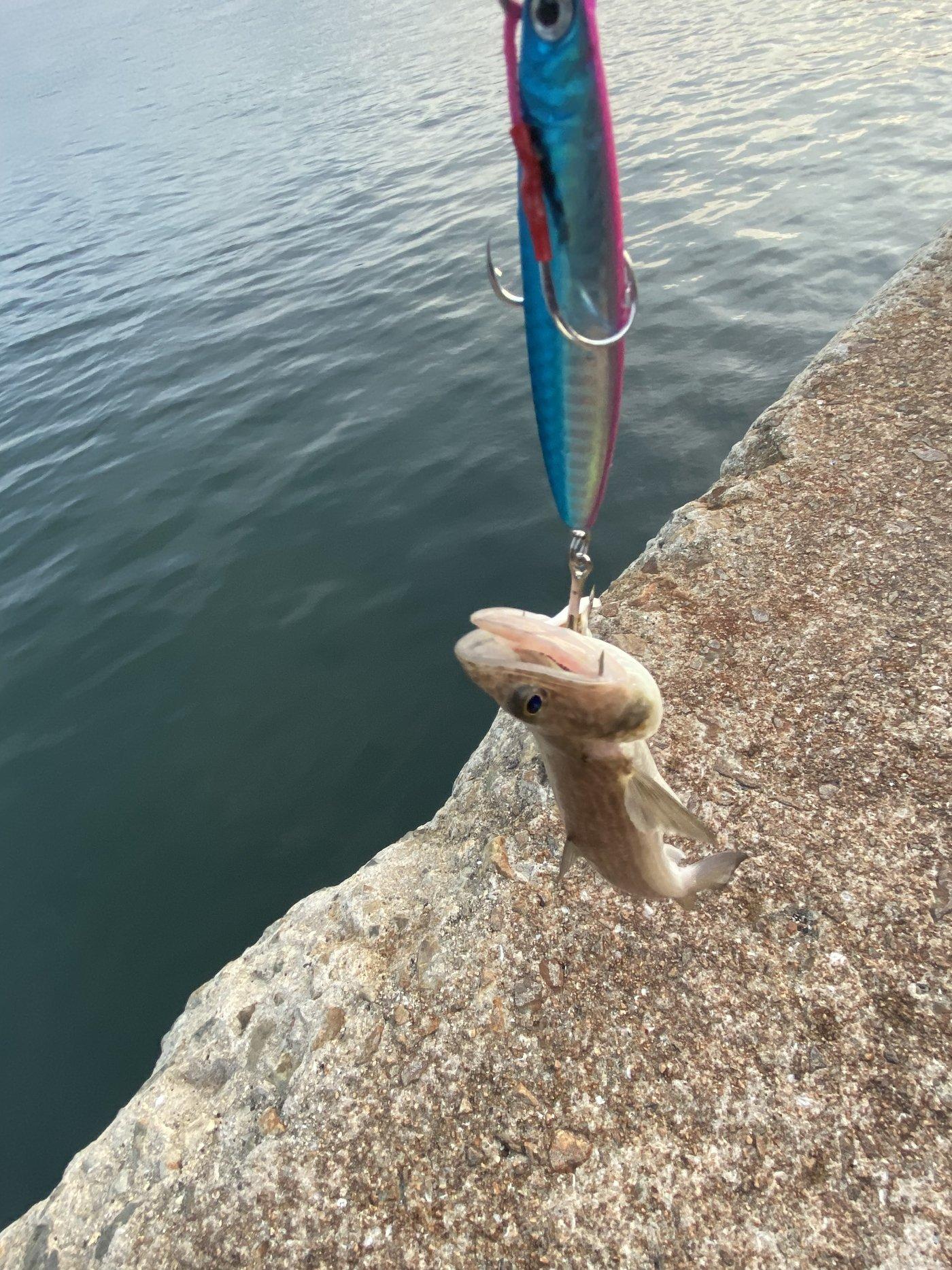 りなべるさんの投稿画像,写っている魚はトカゲエソ