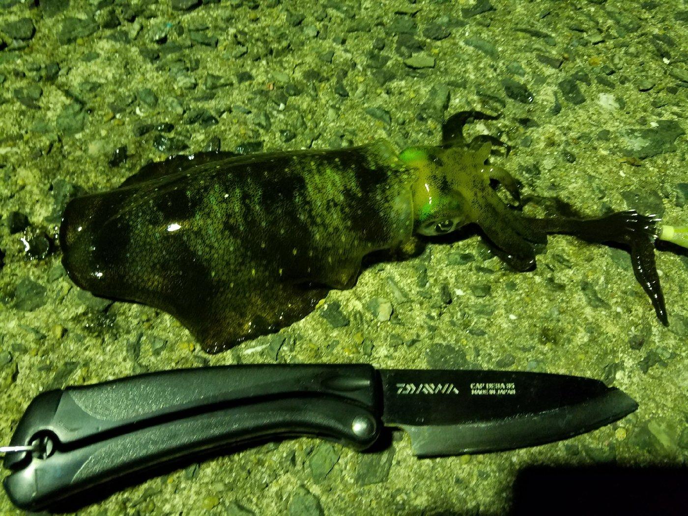 しゃーりーさんの投稿画像,写っている魚はアオリイカ
