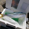 M-SKYさんの神奈川県茅ヶ崎市での釣果写真