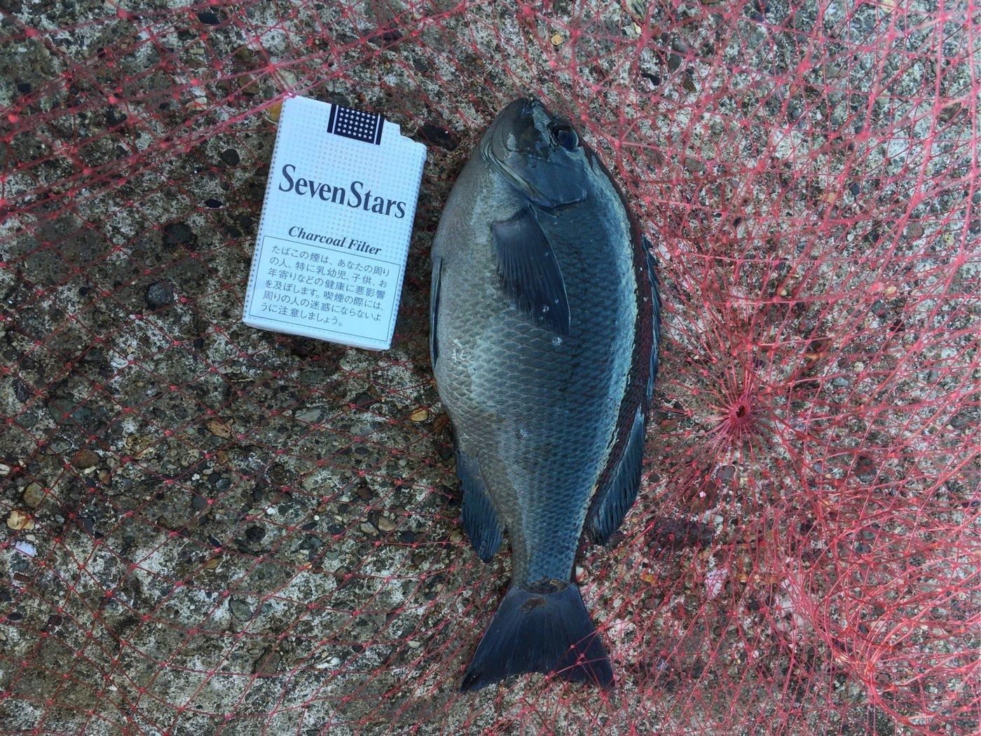 高橋幹博さんの投稿画像,写っている魚はメジナ