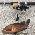 まさおさんの富山県魚津市での釣果写真