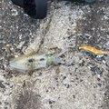 イカ男さんの島根県大田市での釣果写真