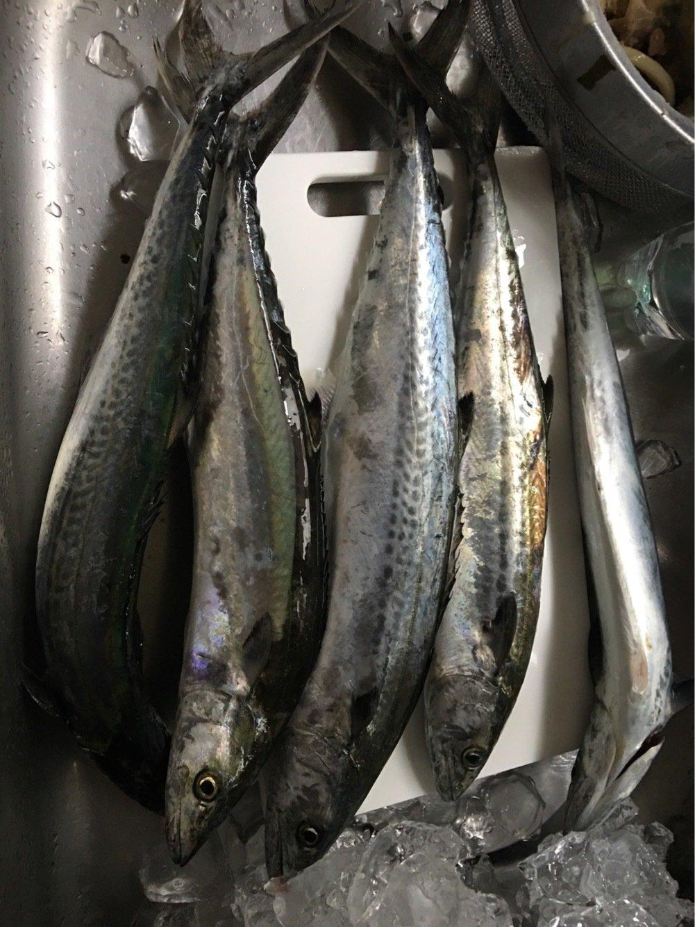 エギミノさんの投稿画像,写っている魚はサワラ