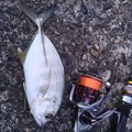 PIKEさんの千葉県いすみ市での釣果写真