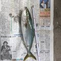 東行拓さんの広島県尾道市での釣果写真