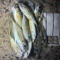 fishing life  🎣さんの岡山県新見市での釣果写真